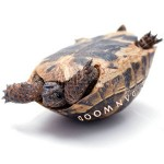 danwood turtle turned