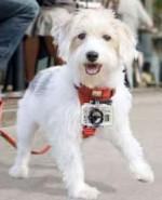 GoPro-dog